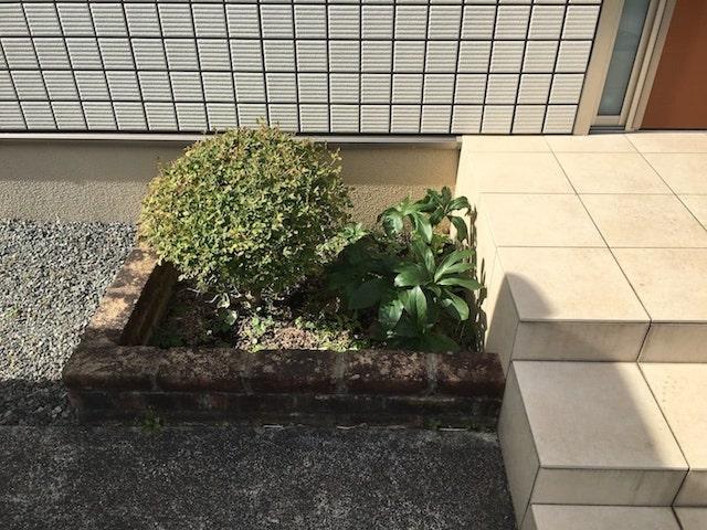 玄関外の花壇