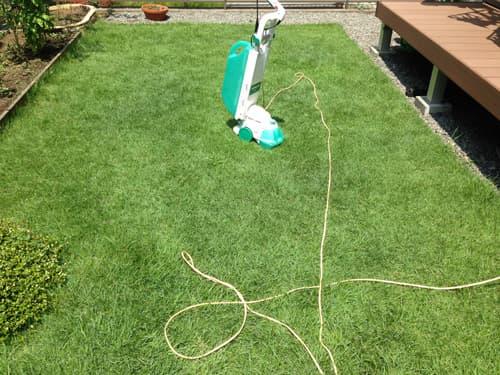 庭に植えたTM9の芝生