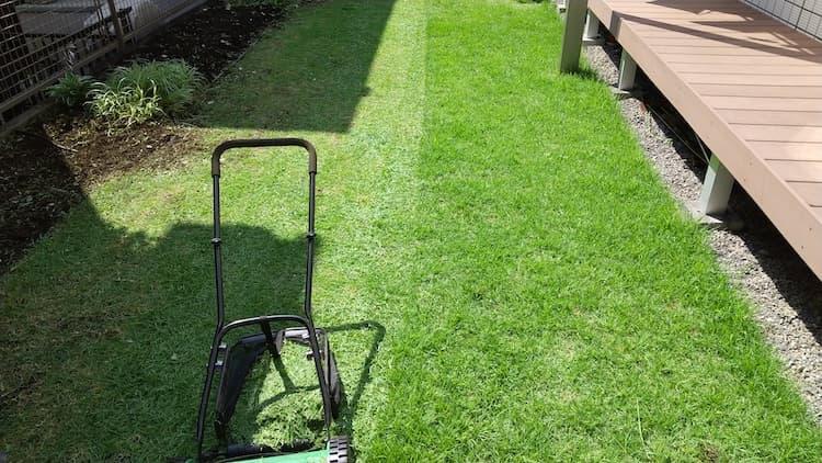 2021年のTM9の芝生